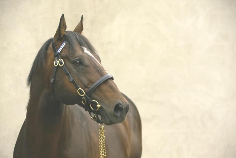 BREEDING INSIGHTS: A King and a Lady are racing royalty