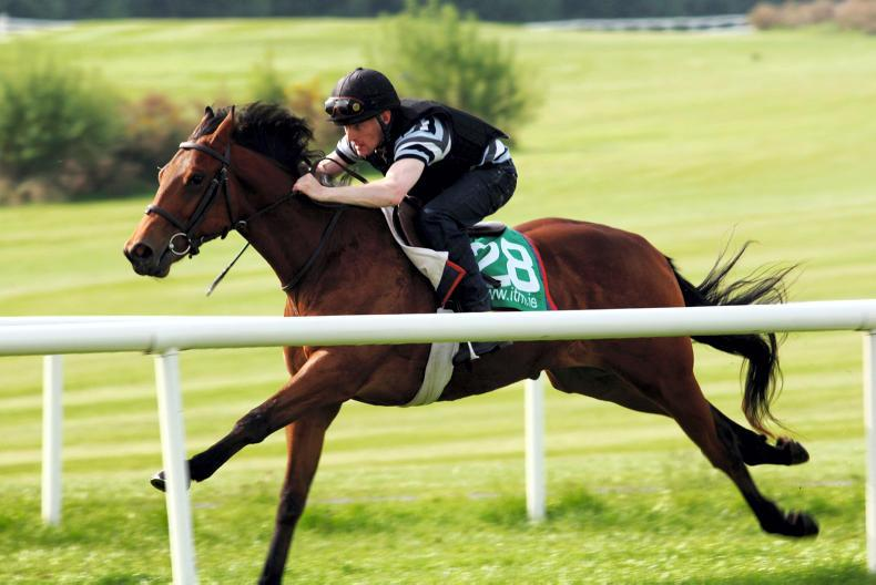 NEWS: 'Welcome to Goresbridge at Fairyhouse'