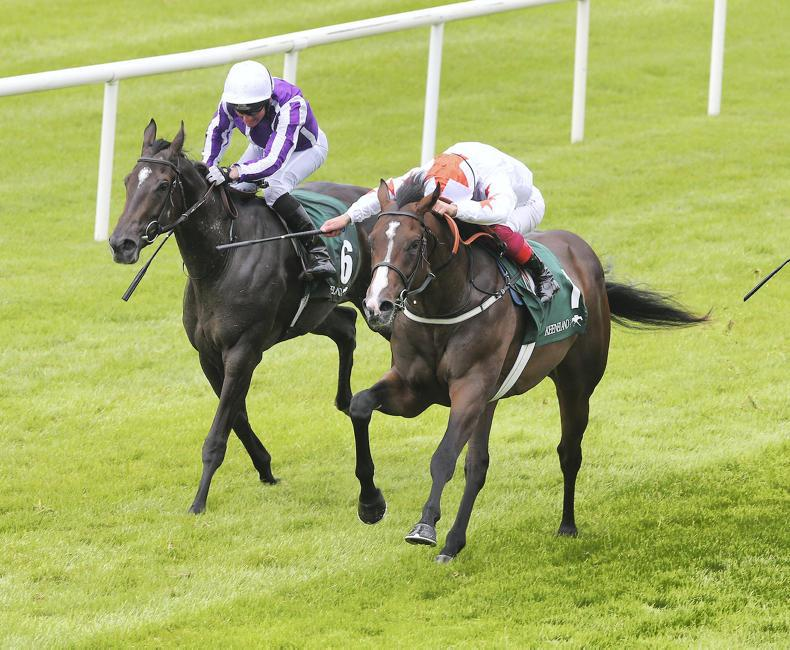 PREVIEW: NAAS SUNDAY: So Perfect bids for a sucessful sprinting return
