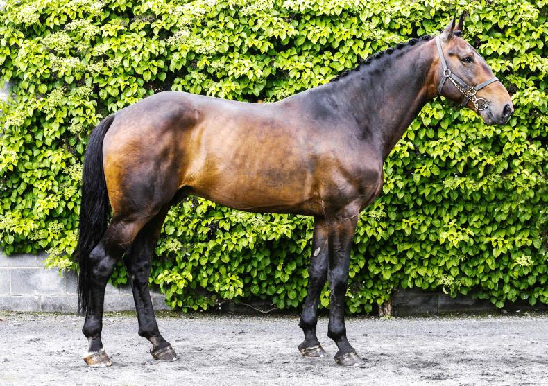 ADVERTORIAL:  Carrick Quidam De Revel is a welcome choice for breeders