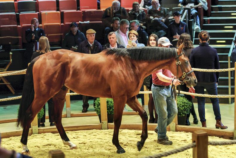 SALES:American Pharoah colt tops strong breeze up sale