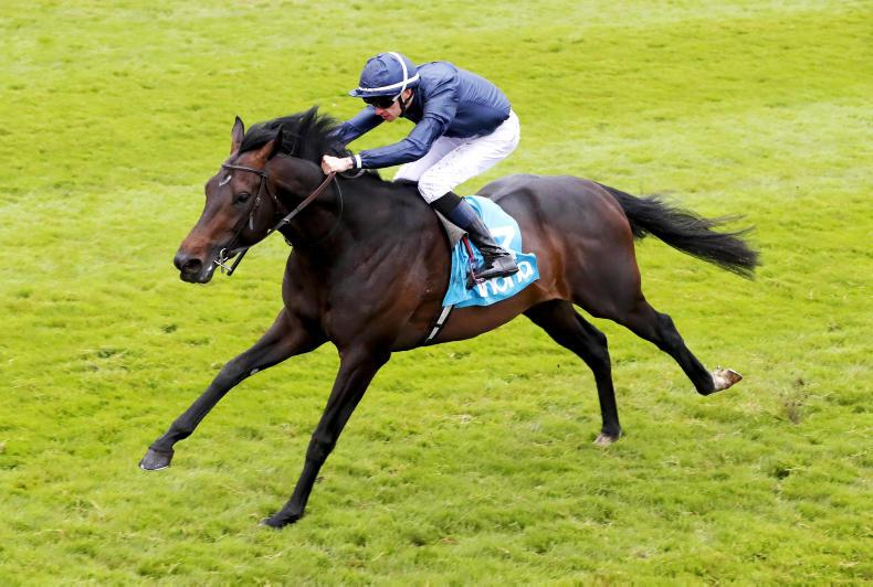 O'Brien indicates Epsom could be favoured option for Sir Dragonet