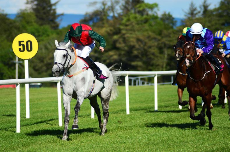 Sligo Tuesday: Honor Oak strikes again
