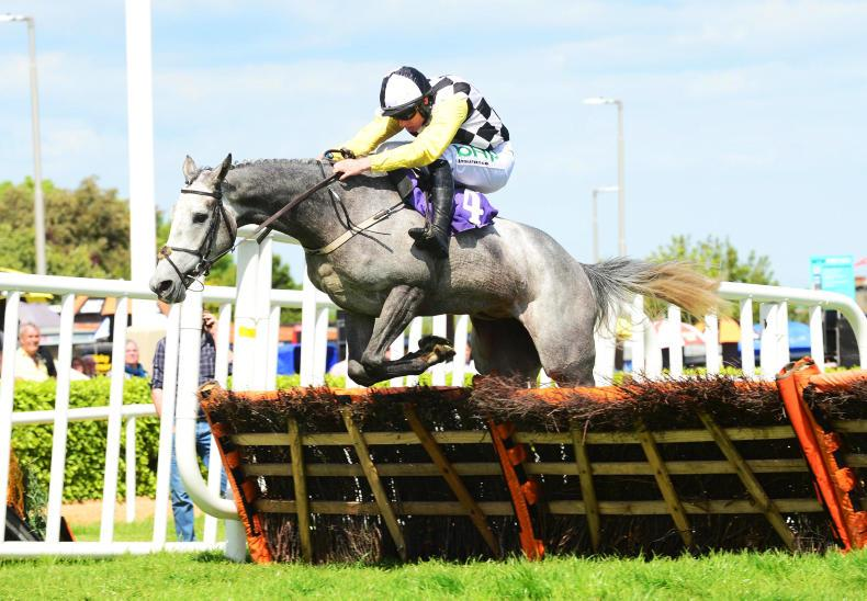 Wexford Wednesday: Shark scythes home by 11 lengths