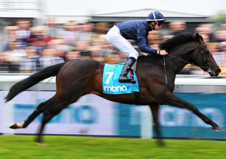 NEWS: Sir Dragonet set to head O'Brien's quest for seventh Derby