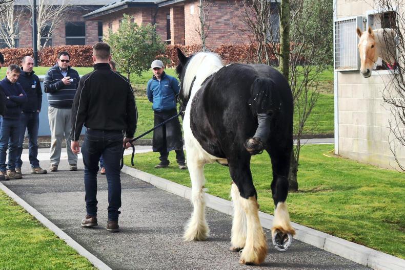 Horse Sense: Equine laminitis seminar at CAFRE