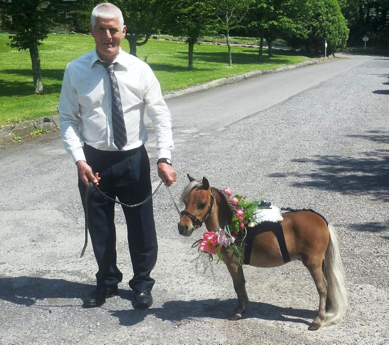 PONY TALES: 'Stumpy' to become a royal