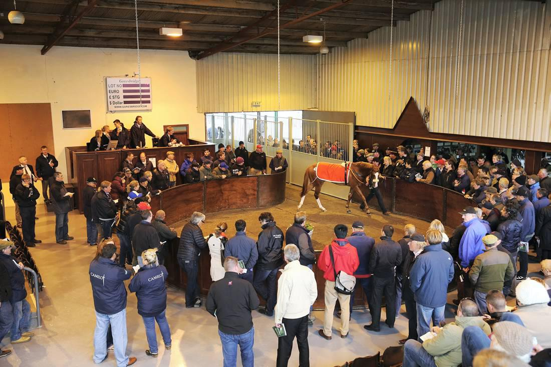 VAT on horse sales to almost double from January