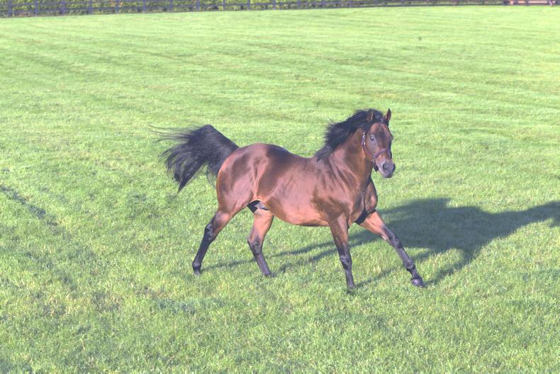 BREEDING INSIGHTS: Dubawi's 100th milestone for Godolphin