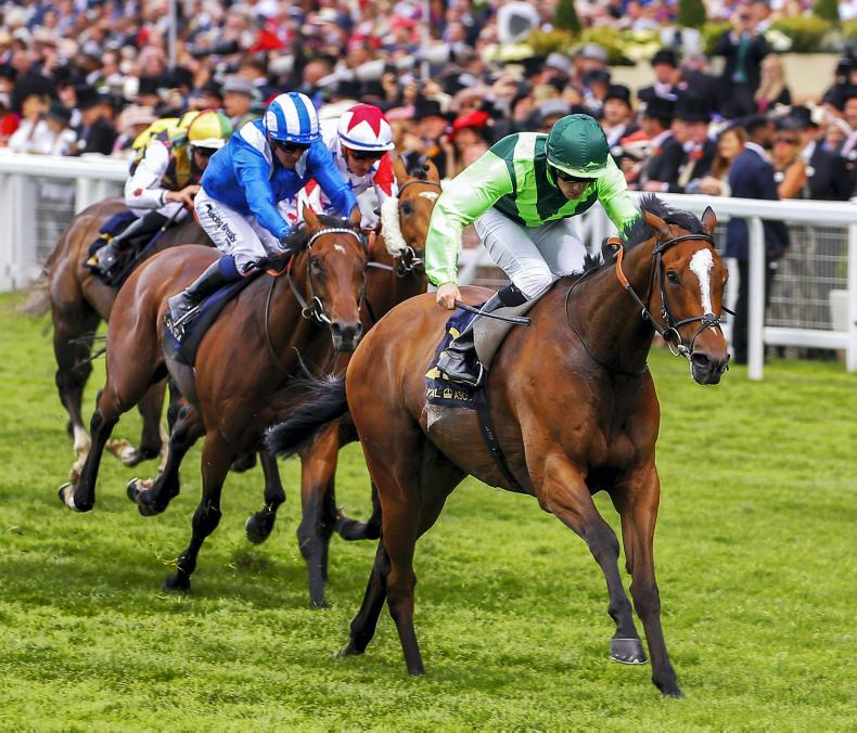 HORSES TO FOLLOW:  Settle ready for Royal repeat?