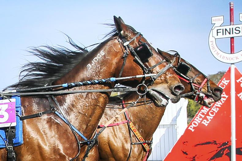 HARNESS RACING:  Kavanagh claims the honours