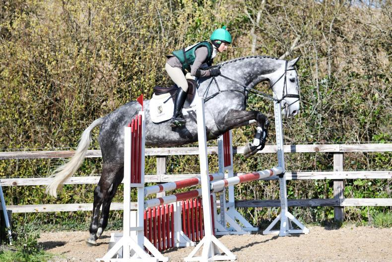 YES QUALIFER: Greenhall Granuaile delights O'Connor and Ennis