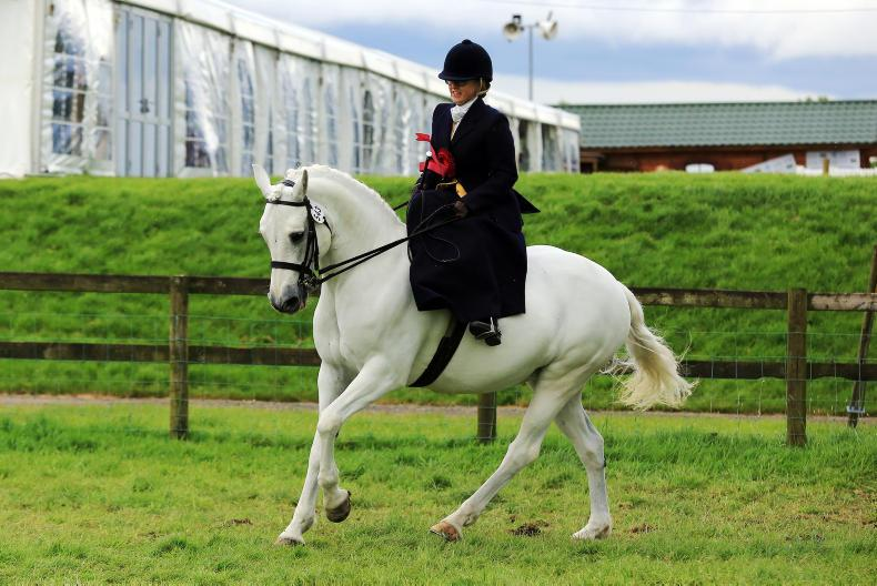 AIRC FESTIVAL: Rosscon Camille lands breed title