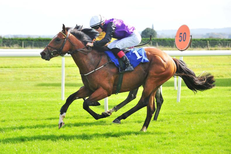 GOWRAN PARK SUNDAY: Guessthebill gets the vote
