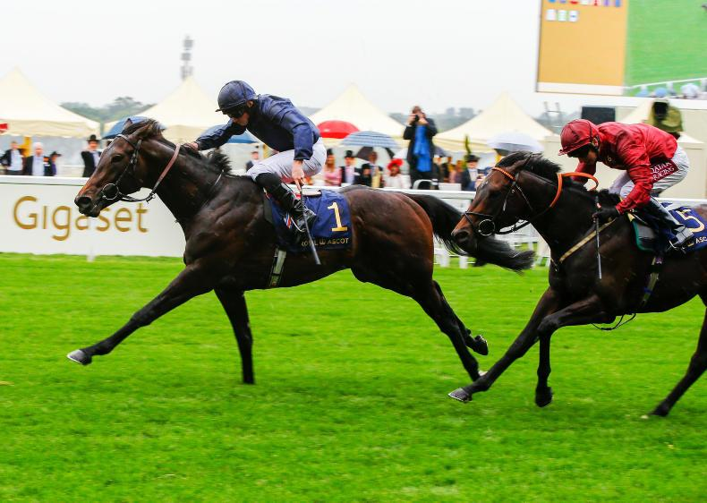 ROYAL ASCOT TUESDAY: Arizona brings nine up for O'Brien