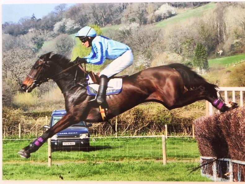 MARGIE MCLOONE: Irish-breds win all three national awards