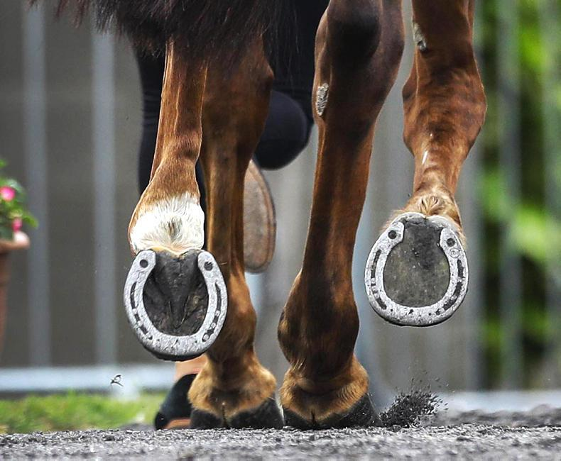 IRISH-BRED SHOW JUMPERS: JUNE 29th 2019
