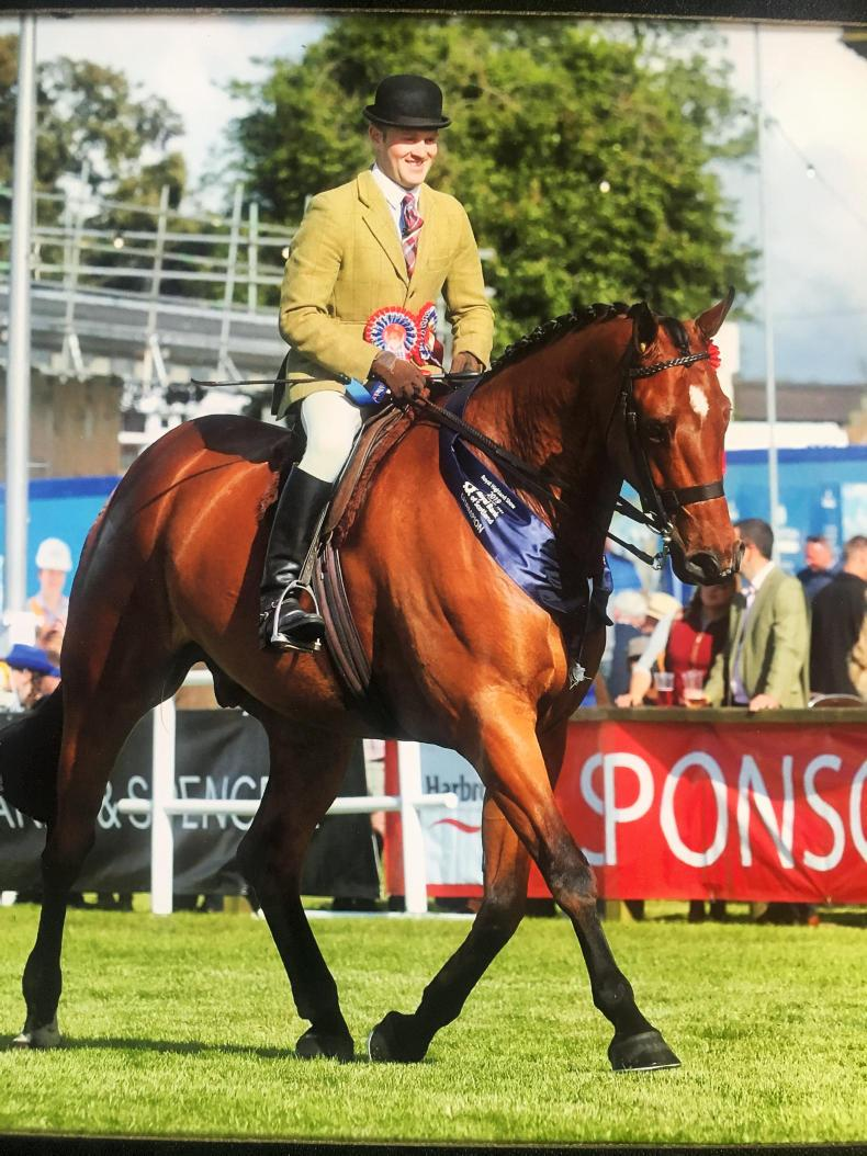 ROYAL HIGHLAND SHOW:  Regal win for Gibson's Applejack