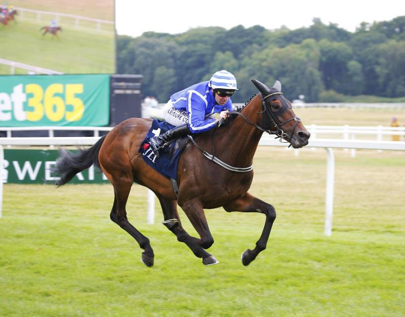 RACING CENTRAL:  Stratum to bloom for Willie?