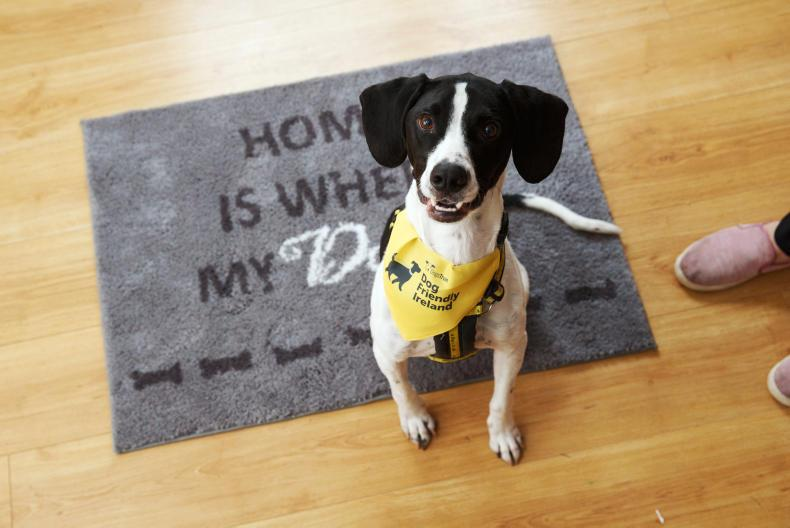 DOG FEATURE 2019: Care and consideration put into rehoming dogs at Dogs Trust