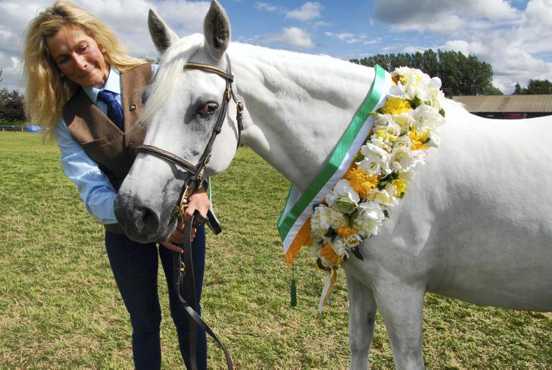 NEWS: Bumper Midlands Connemara Pony Show on the cards