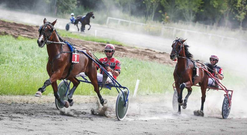 HARNESS RACING:  Goggin and Gamblers land the money