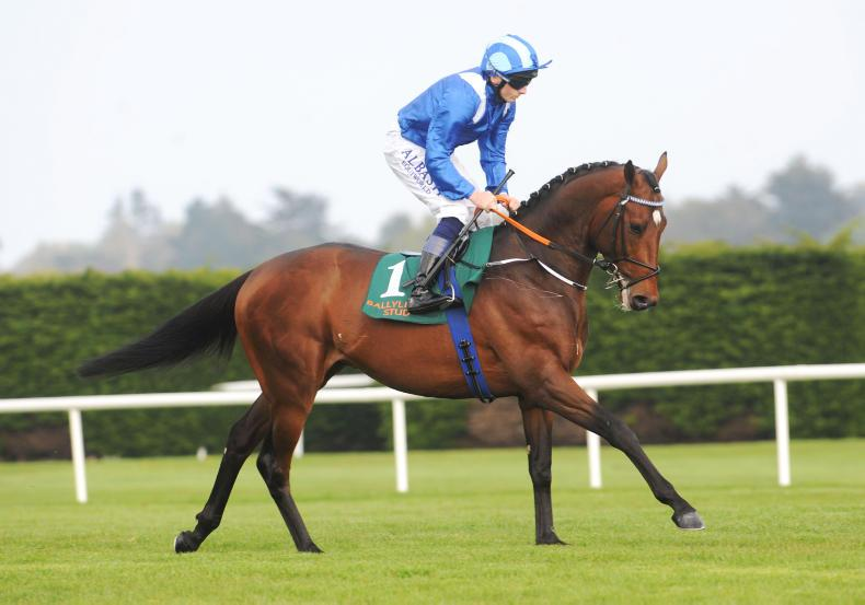 Madhmoon to drop in trip following Irish Derby disappointment