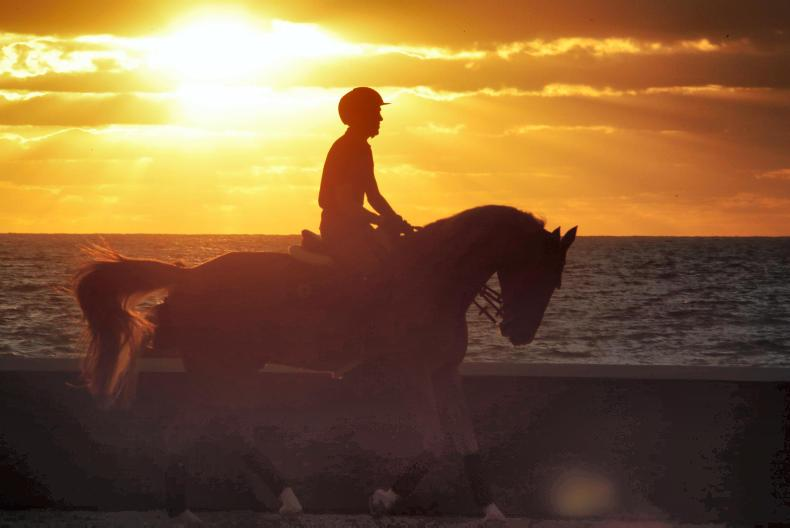 PONY TALES: Life's a beach in Donaghadee