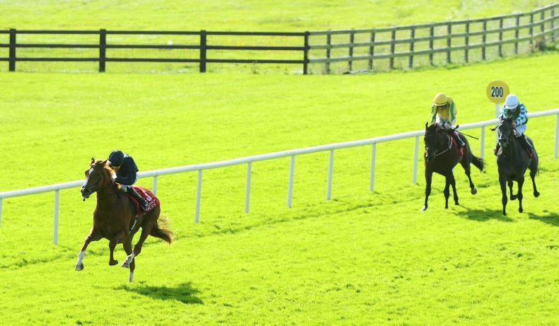 BREEDING INSIGHTS: Sovereign rules at the Curragh