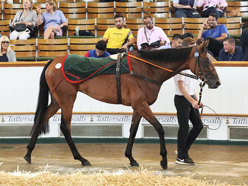 TATTERSALLS JULY SALE: Zoustar's half-sister tops opening session