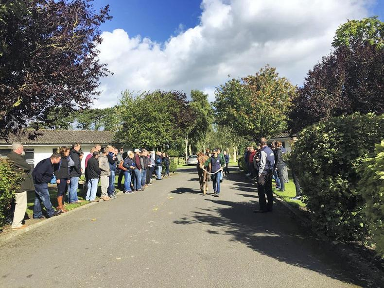 SALES PREPARATION FEATURE 2019: ITBA foal sale preparation workshop