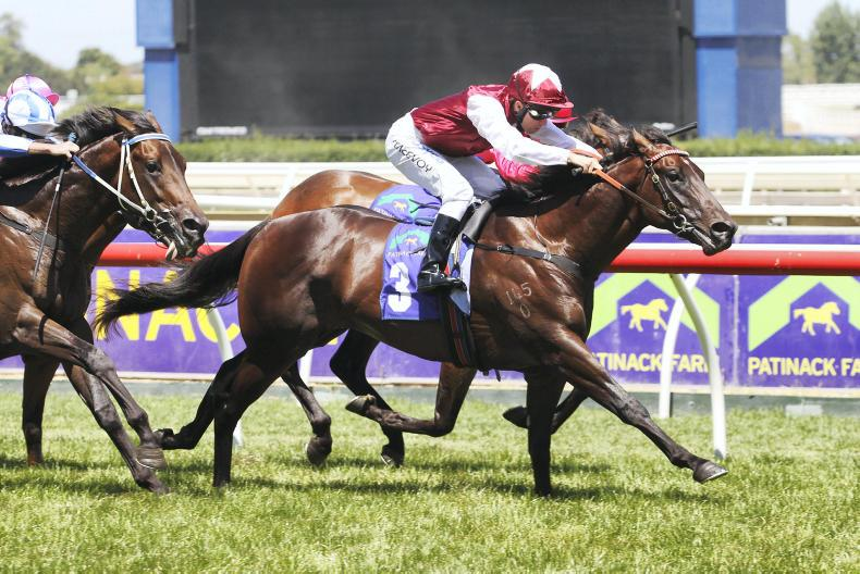 BREEDING INSIGHTS: Kurious boost for her sire