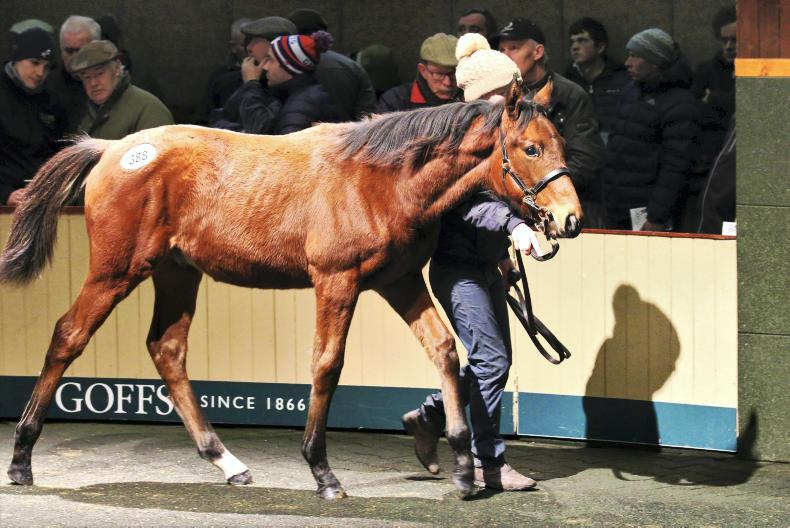 SALES PREPARATION FEATURE 2019: How best to prepare a horse for the sale
