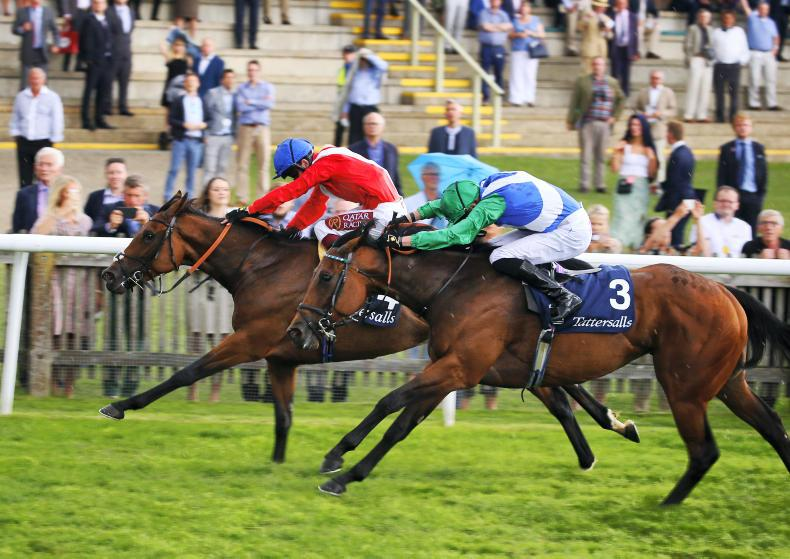 BRITAIN: Veracious betters dam in thrilling Falmouth win