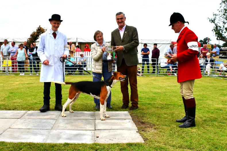 STRADBALLY HOUND SHOW:  Special day with winners galore