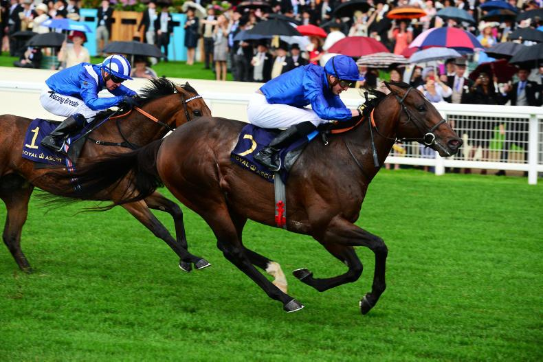 NEWS: Blue Point to stand at Kildangan Stud