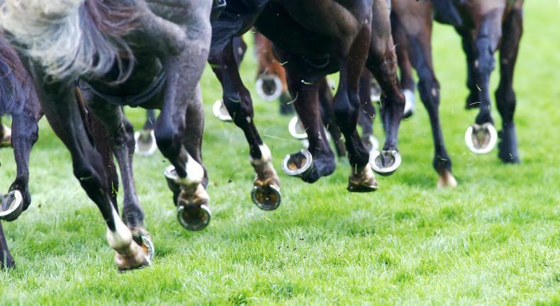 RYAN McELLIGOTT: Sport that involves animals subject to great scrutiny