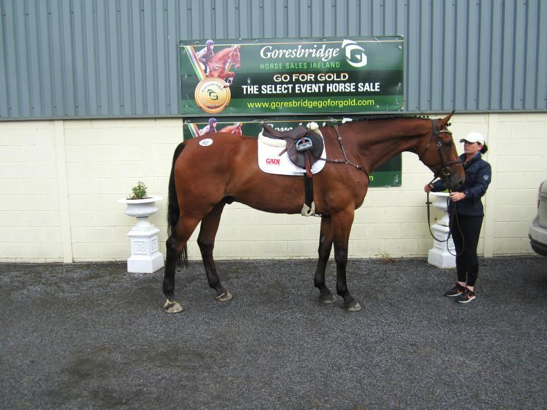 GORESBRIDGE SALES:  Pacino gelding tops sale at €12,000