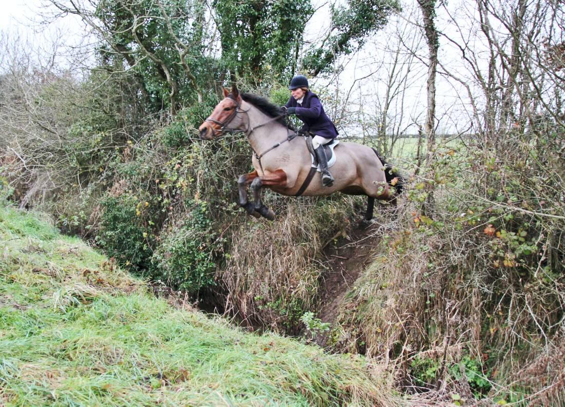 Renewing acquaintances with the Laois Foxhounds