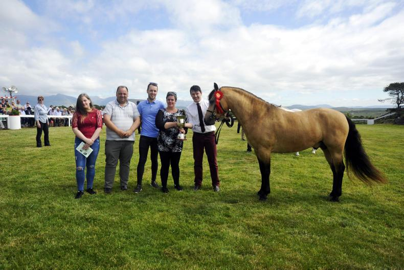 PONY TALES: Colm Costello remembered at Roundstone Show