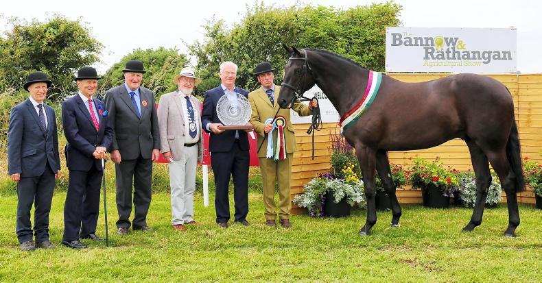 NEWS: Bannow crown for Kilmastulla Newmarket Knight