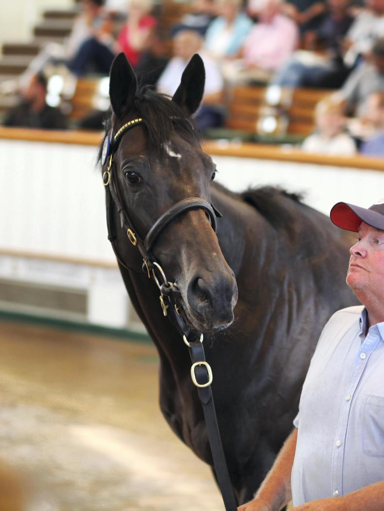 SALES: Inverleigh stars as July Sale concludes