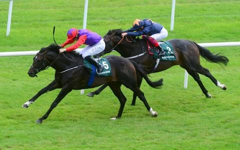 Romanised impresses in Minstrel Stakes