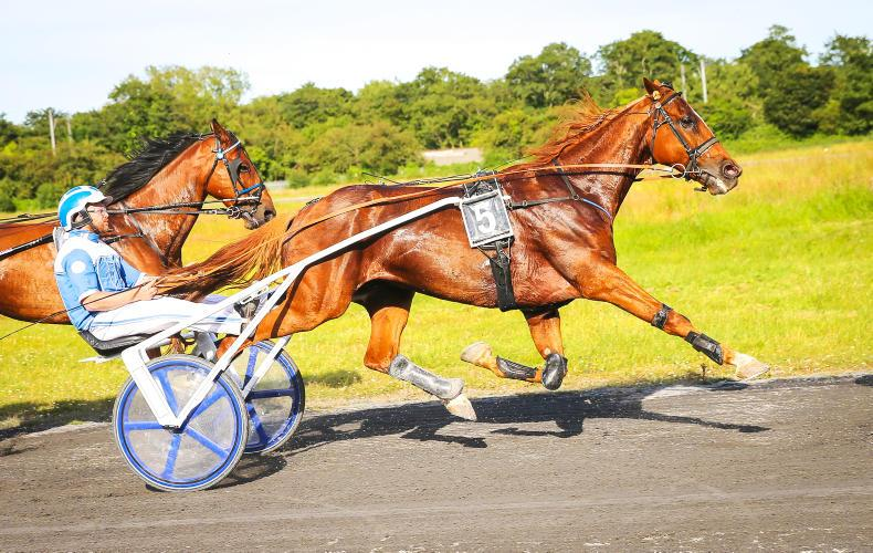 HARNESS RACING: Timlin and Kane share the spoils