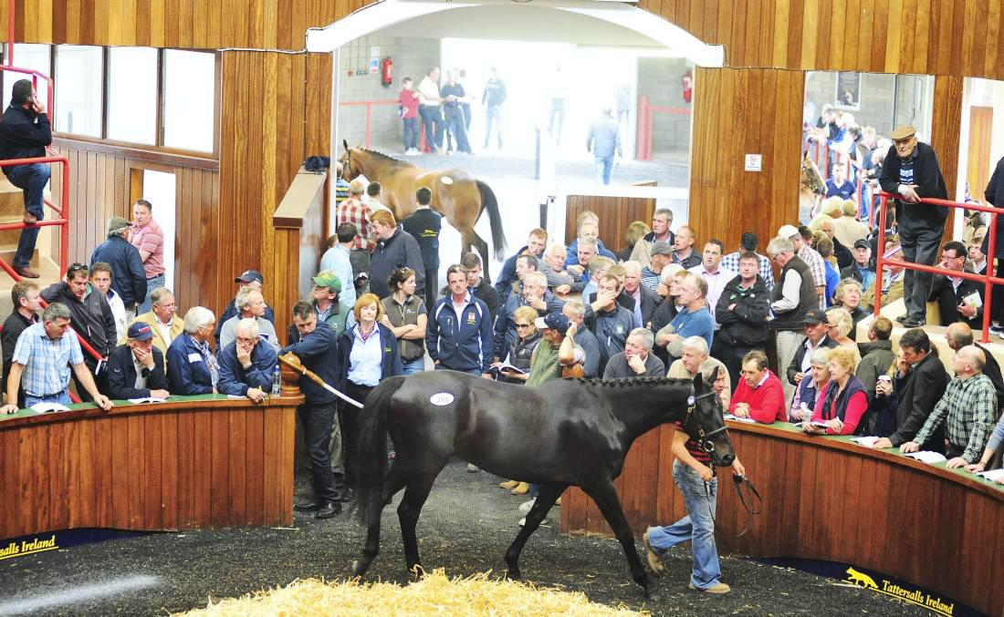 Review 2014: Demand for store horses feeds through to foal market