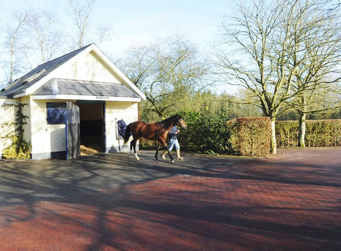Letter to Editor: Thanks to Coolmore Stud