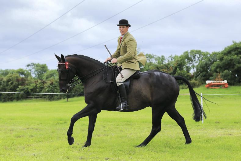 AROUND THE COUNTRY:  Ballykelly Eva's strike rate continues