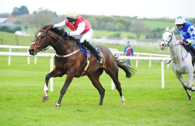 HORSES TO FOLLOW: Ballyegan Hero shows improvement