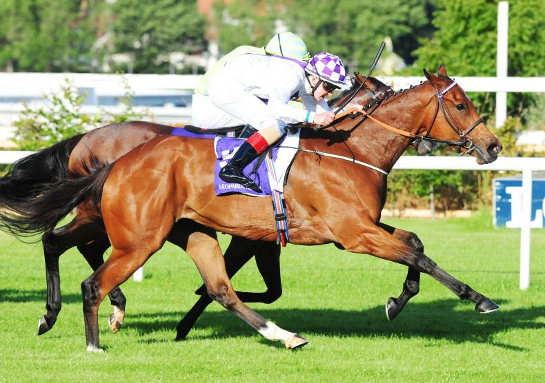 GOWRAN PARK SATURDAY: Suaimhneach searching for back-to-back wins