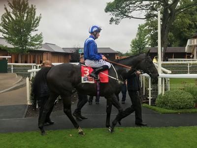 Elarqam dominates York Stakes